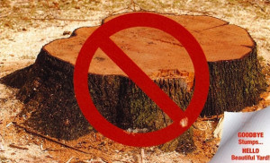 image of tree stump