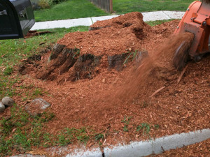 monroe-wa-stump-removal-stump-grinding-13