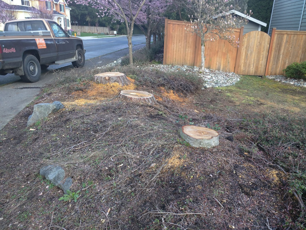 bothell wa stump removal another stump bites the dust jay u0027s
