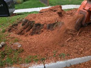 monroe-wa-stump-removal-stump-grinding-13