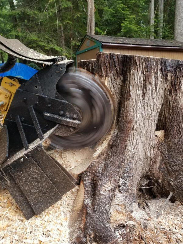 seattle stump grinding